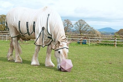 White Horse with summer Rug
